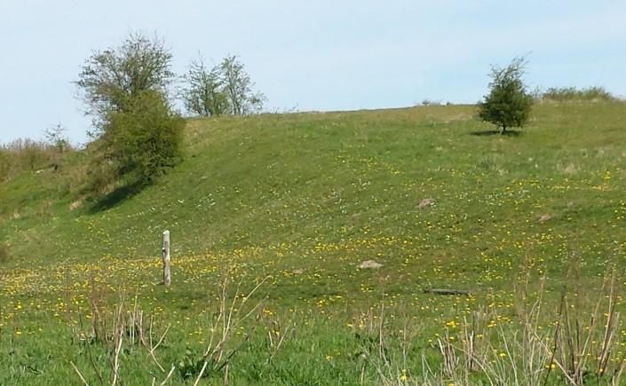 Bakken hæver sig på grænsen af Borum, Lyngby og Yderup Ejerlav.