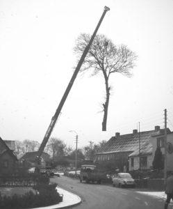 Træet lettede i1978 fra et hjørne mellem Langelinie 40 og Langelinie 42.